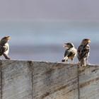 Птиците пеят по-хихо и секси заради пандемията Снимка: Пиксабей