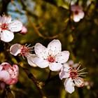През пролетта се внася азотен тор