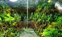 Виж как хотел в Слънчев бряг бе превърнат в наркоферма, специални филтри убивали миризмата