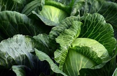 Българската агенция по безопасност на храните възбрани над 20 т зеленчуци, внос от трети страни, с установено наднормено съдържание на остатъчни вещества от пестициди. СНИМКА: Пиксабей