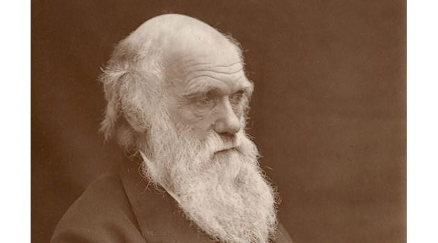 Изчезна Дървото на живота на Дарвин