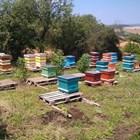 В личните стопанства могат се отглеждат до пет пчелни семейства