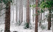 Прогноза: Силни бури ще бушуват на Балканите тази зима