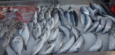 Започват проверки на рибата за Никулден, агенцията по храните със съвети към потребителите