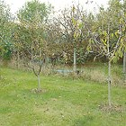 Есенно третиране на дърветата с карбамид