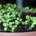 В личното стопанство: Подготовка за отглеждане на разсад за ранни зеленчуци