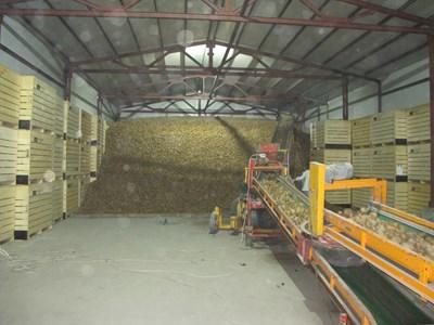 В хранилището картофите могат да се съхраняват до април, ако продукцията се обработи и условията се контролират