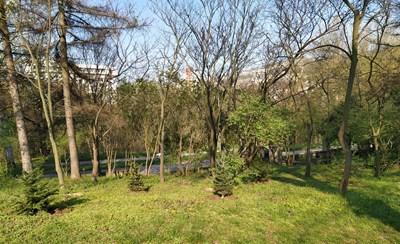Част от засадените дръвчета СНИМКА: Община Велико Търново