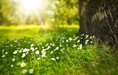 Слънчево ще е днес. Снимка: Пиксабей