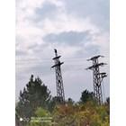 """Опасни селфита на електрически стълб изправиха косите на търновци. СНИМКИ: Фейсбук/""""Дивотия до шия във Велико Търново"""""""