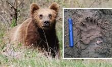 """Само в """"168 часа"""": Паника в столичен квартал заради мечка!"""