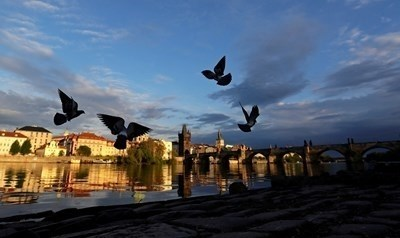 Чехия ще позволи на повече деца да се върнат на училище и ще разхлаби някои от рестрикциите, въведени заради коронавируса СНИМКА: Pixabay