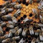 Поради увеличеното количество на пилото, което пчелите отглеждат в пчелните гнезда през пролетния период, се повишава и нуждата от вода.