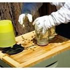 Последните излюпени есенни пчели са най-ценни. Те не са отглеждали пило и ще живеят най-много.
