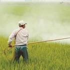 Резултатите от новото проучване ясно показват, че дори за двете най-важни ГМ култури в Съединените щати - царевицата и соята, токсичността се увеличава със същата скорост като при конвенционалните култури