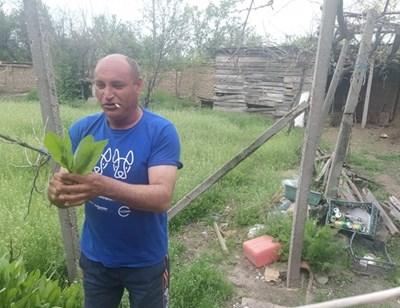 Калоферчето е чудна подправка не само за печеното агне, но и за фасула, казва Ивайло Начев