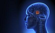 Все по-близо до Граала: Кодът в мозъка, който води към съзнанието