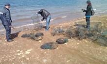 Спипаха бракониери от Търговишко край яз. Батак с над 2000 речни рака
