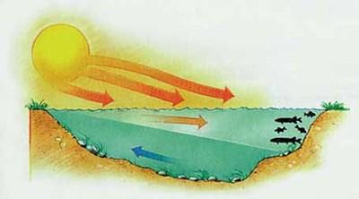 Разположение на едрите хищни риби при слънчево и хубаво време