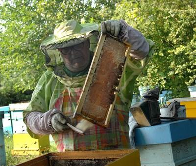 """Пчеларите ще получат """"де минимис"""" от 7 лв. на пчелно семейство."""