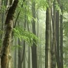 Откриха останки от дъждовна гора на 90 милиона години близо до Южния полюс СНИМКА: Pixabay
