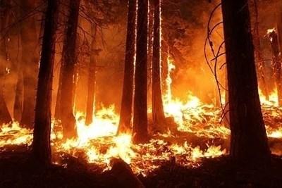 Пожарникари гасят общо 36 пожара в страната