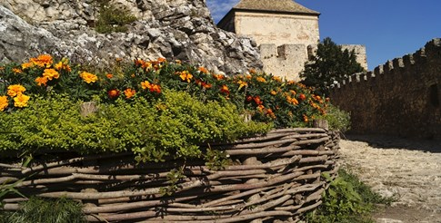 Градина: Невенът - красив и полезен