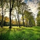 Над 1 млн. лв. са събрани от глоби за разходки в парковете на София