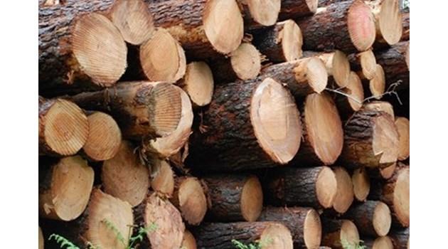 В Тервелско заловиха контрабандна дървесина