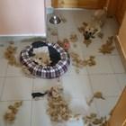 Разделителна тревожност при кучетата