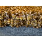 Недостигът на пчелен прашец в пчелните семейства води до белтъчен глад и като следствие до т.н. белтъчна дистрофия.