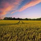 Безработните запазват помощите си, ако се включат в селскостопанска работа