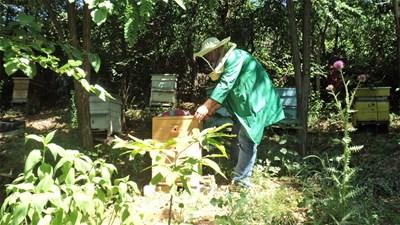 Борислав Давидков се страхува повече от инжекция, отколкото от ужилване от пчели. СНИМКА: Антоанета Маскръчка