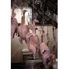 И макар пуешкото месо все още да е популярно сред канадците, с малко над 4 кг консумирани на глава от населението, пуешката индустрия се бори за оцеляване.