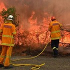 100 са опожарените австралийски млечни ферми