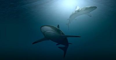 Половин милион акули могат да умрат заради COVID ваксина СНИМКА: Пиксабей