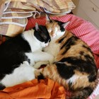 Няма нито един случай на домашно куче или котка, заразяващи човек с COVID-19.