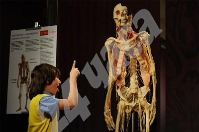 """Изложбата """"Човешкото тяло"""" се препоръчва като образователна за деца над 5 г, макар и доста възрастни да се стряскат от мумифицираните тела и органи. СНИМКИ: БУЛФОТО СНИМКА: 24 часа"""