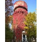 """В ярки багри грее водната кула в столичния кв. """"Лозенец"""" - една от най-красивите есенни гледки в града.  СНИМКА: НИКА СТОИЛОВА"""