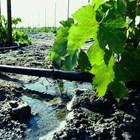 Каква влажност на почвата да се поддържа