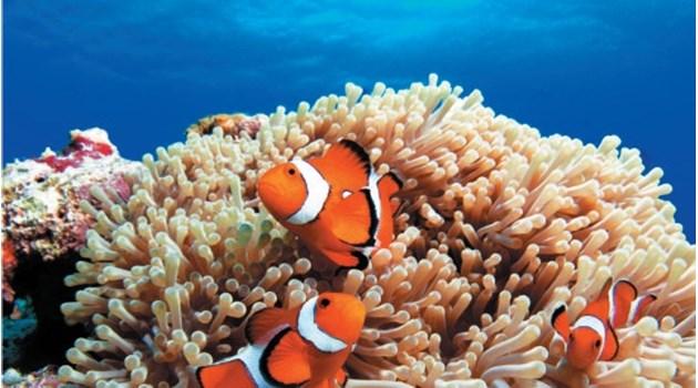 Още една причина да опазим Кораловите рифове