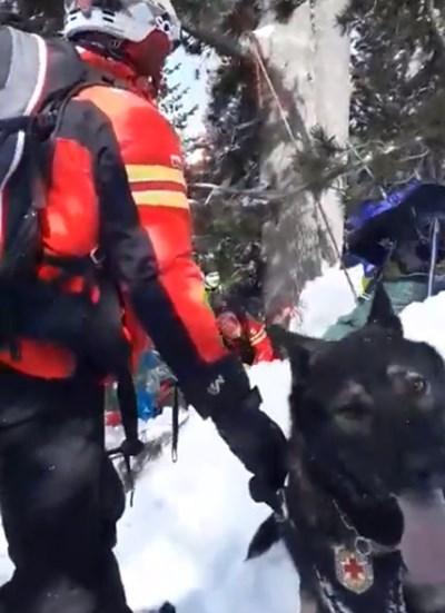 Вижте как планински спасители с кучета издирват затрупаните от лавината в Банско (Видео)