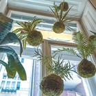 Кокедама - японско изкуство с растения