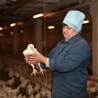 Оценете на състоянието на стъпалата на 100 птици, за да разберете има ли проблем стадото
