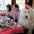 Куче кани на пижамено парти за мартеници