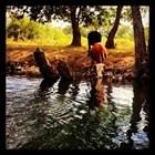 Питомни говеда на водопой на река Велека