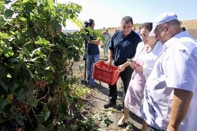 За първи път тази година лозарите получиха директна подкрепа, каза министър Деисислава Танева при посещение на лозови масиви край Чирпан.