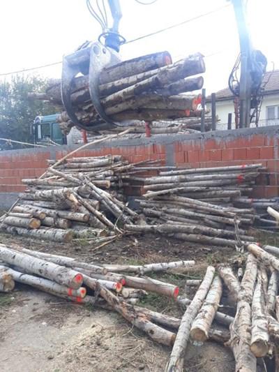 Незаконно добитата дървесина.