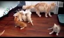 Котешка паника