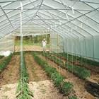 Пет от най-важните неприятели, които вредят по растенията в парници и оранжерии